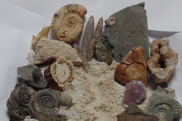 Stenen en fossielen zoekmiddag bij NMC Weert