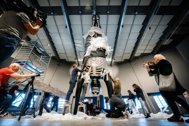 Heijens bedrijf maakt kolossaal beeld voor wetenschapsmuseum