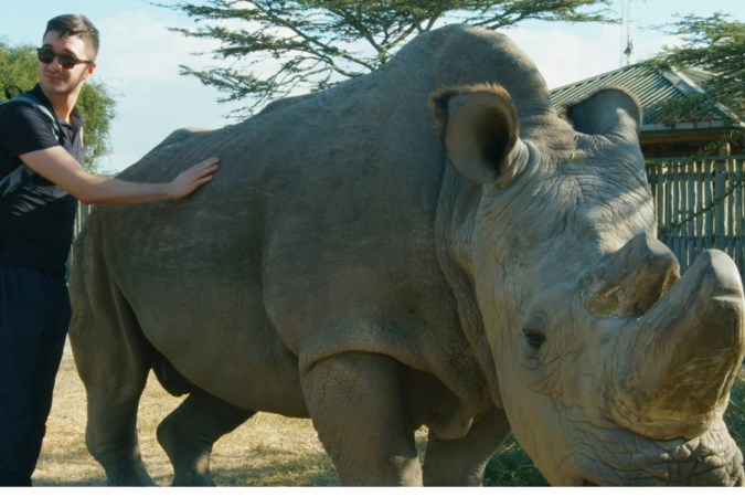 Ramp rond neushoorn op de savanne verloopt in slow motion