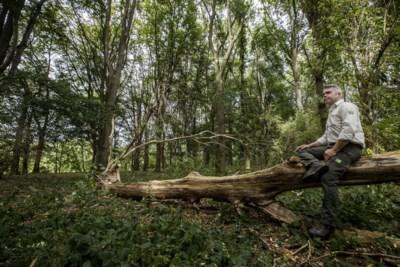 Staatsbosbeheer gaat in Zuid-Limburgse gebieden natuur een handje helpen