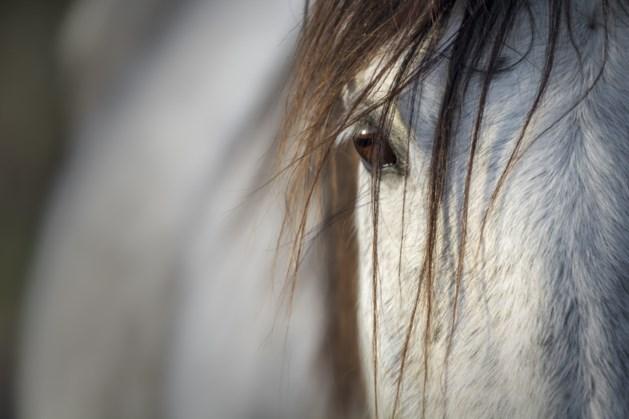 Open dag paardenkliniek de Molenweg in Maastricht