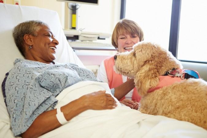 Proef: huisdier op ziekenbezoek in ziekenhuis VieCuri