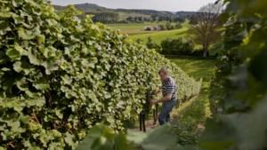 In Limburg zijn de jaren van gesteggel over elkaars wijnen voorbij