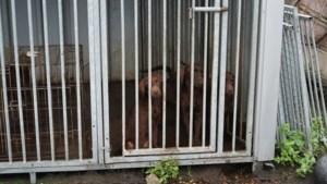 Eigenaar verwaarloosde puppy's: 'Ik behandel honden niet slecht, zat gewoon in sauna'
