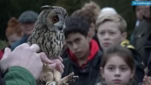Video: roofvogels en uilen krijgen vrijheid terug: 'De mooiste avond van het jaar'