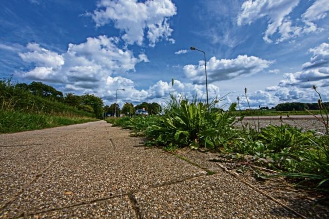 Snoeien in groenonderhoud: onkruid rukt op in Limburgs straatbeeld