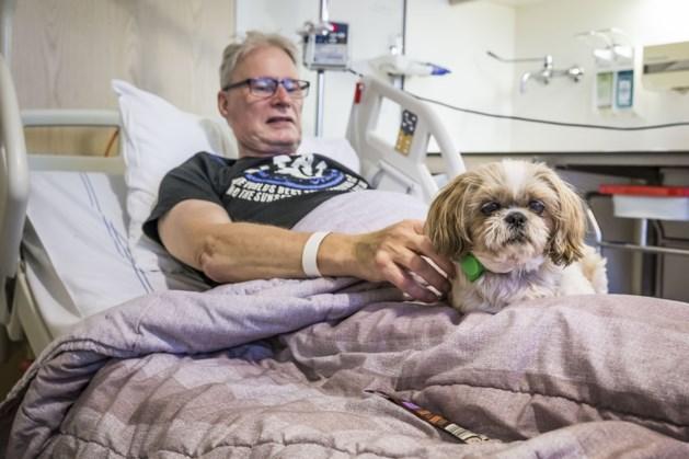Primeur voor hondje Daisy: op bezoek bij het baasje in het ziekenhuis