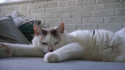 Katten zijn onweerstaanbaar, ook op het witte doek