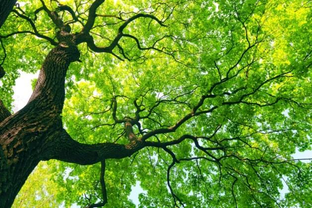 Lezing en excursie over 'de laatste levensfase van een boom' IVN Stein