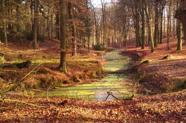 Herfstkleuren in wandeling Trampelkeu Schimmert