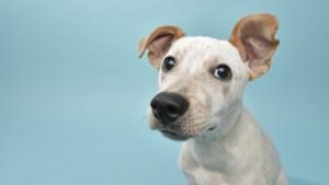 Verschillende lezingen over probleemgedrag bij honden in Stein