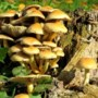Kinderactiviteit rond paddenstoelen op de Groote Heide