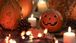 Halloween avond in Steinerbos in Stein
