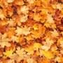 Herfststukjes maken in Eckelrade