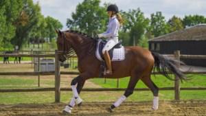 Citaverde krijgt bijna 2 miljoen voor paardenopleiding