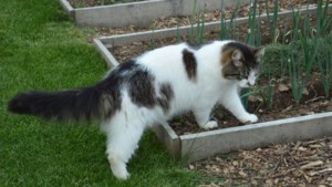 Schijtbeest! Dit kun je doen tegen katten in je tuin