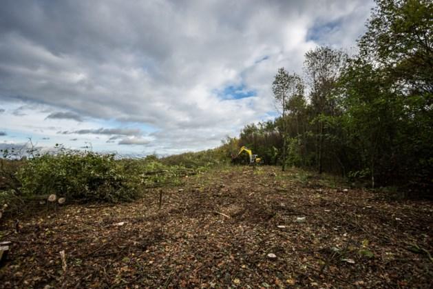 Kap van bomen in Kapellerbos Landgraaf ligt stil