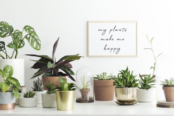 Help, red mijn plant! Met deze tips krijg ook jij groene vingers