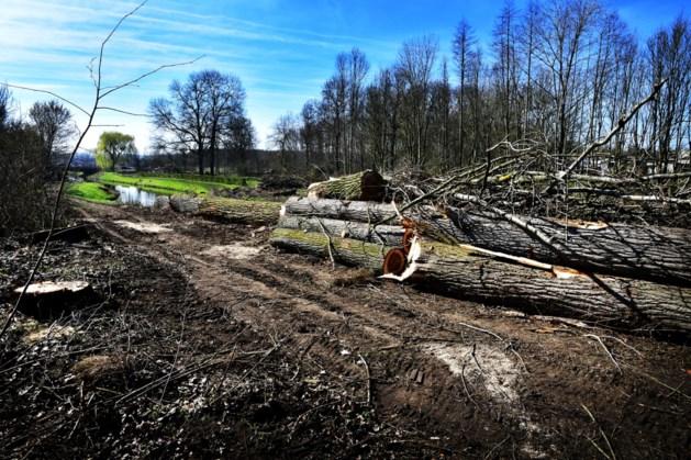 Illegaal gekapt bosje in Ospel wordt verderop en groter herplant
