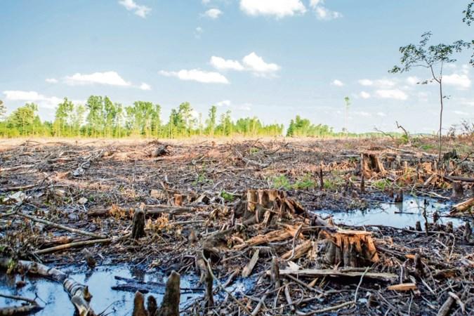 Amerikanen woest op Nederland: 'Stop met subsidie biomassa'