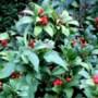 Lezing rond besdragende planten in herfst en winter