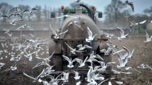 Hoe de meeuw uit de Peel verdwijnt en de kraanvogel juist blijft