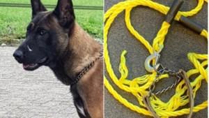 Hond vastgebonden aan boom: politie zoekt baasje