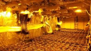 Politie rolt grote kwekerij met 1250 hennepplanten op