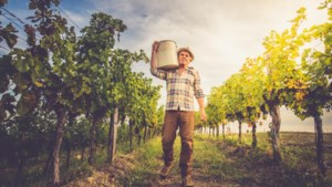 Zuid-Europese wijnboeren hebben last van koud voorjaar