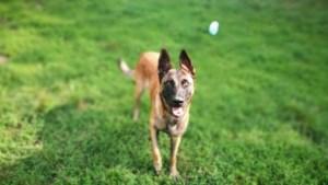 Dierenpolitie haalt verwaarloosde honden uit woning, baasje eerder op vingers getikt