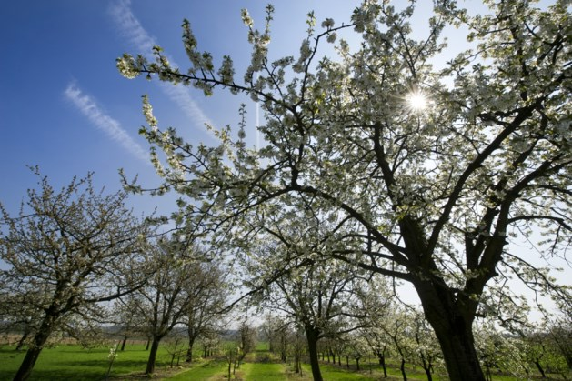 Lezing IVN Eys: 'Euver de Limburgse freutweij en bongerd'