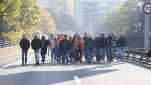 Aanvalsplan Limburg voor stikstofprobleem