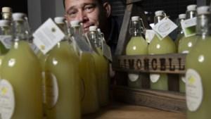 Voor het Guinness Book of Records: met honderden in Schinveld citroenen schillen om limoncello te maken