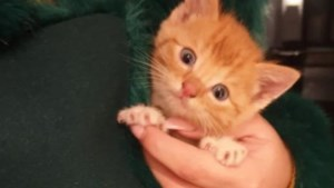 Nieuw onderkomen voor uit rioolbuis geredde kitten Simba
