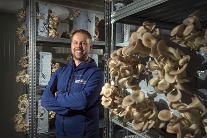 Zwamburg teelt oesterzwammen met respect voor Moeder Aarde