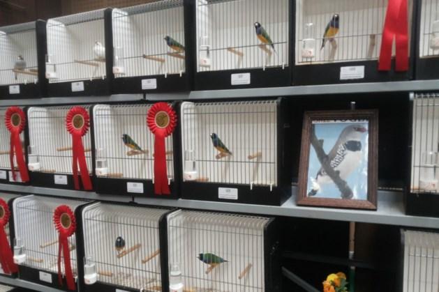 Grote vogeltentoonstelling in Meerlo
