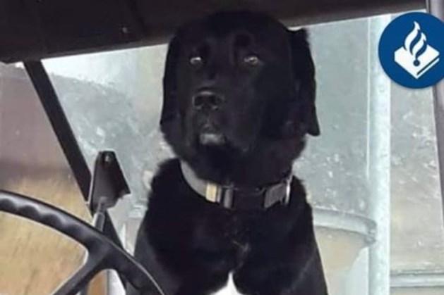 Hond van bejaarde vrouw doodgereden: bestuurder rijdt door