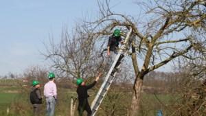 Praktijkinstructie jonge bomen snoeien in Vilt