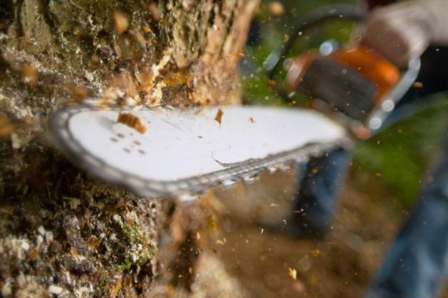 Onderhoud bossen aan oostkant Echt