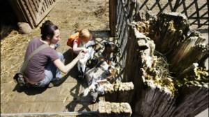 Zesde inbraak in 3,5 jaar tijd bij kinderboerderij Venlo: 'Gelukkig alleen schade, maar je zit wel met de ellende'