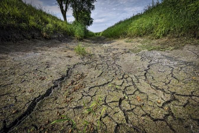 Planten dood door hitte en droogte, Stein trekt de beurs