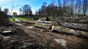 Kap zieke bomen langs Julianakanaal Stein