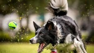 Regels voor gebruik hondenspeelplek Swalmen aangescherpt