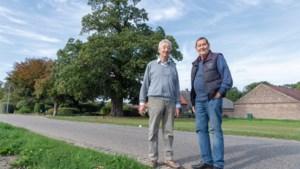 Een Duitse meubelmaker wilde van de 200 jaar oude boom in Venlo tafelbladen zagen