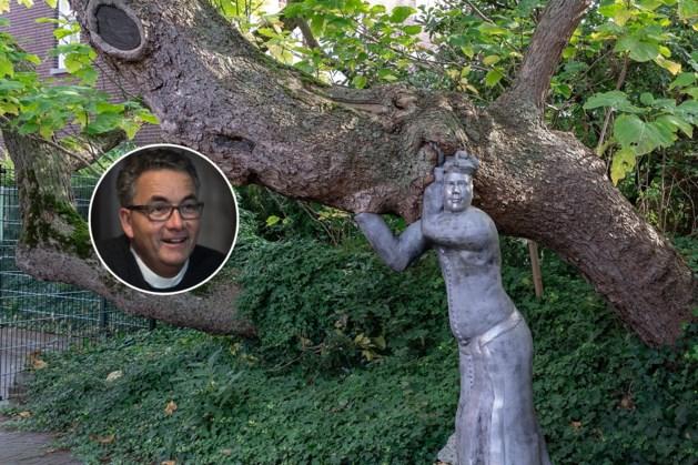 De monumentale boom bij de Pastorie in Tegelen