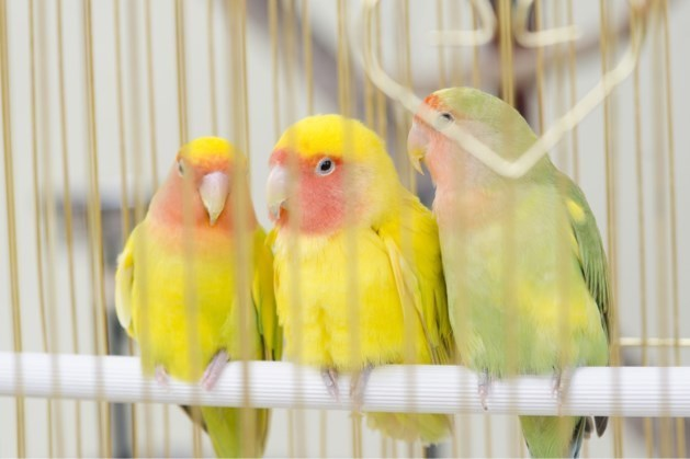 VV Ons Genoegen houdt internationale vogelshow