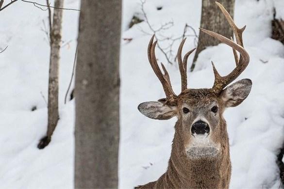 Fotograaf legt zeldzaam hert met gewei van drie hoorns vast: 'Kans van 1 op 1 miljoen'