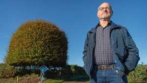 Geen boek over Zuid-Limburg waarin deze bijzondere boom in Trintelen niet staat