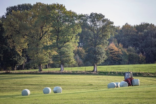 Teuven loopt te hoop tegen 'Hollandse' landbouwschuren