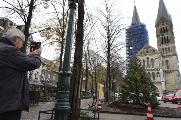 Mammoetboom op Munsterplein Roermond moet zijn naam nog eer aan gaan doen